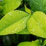 Comment une entreprise peut-elle réduire son impact environnemental?